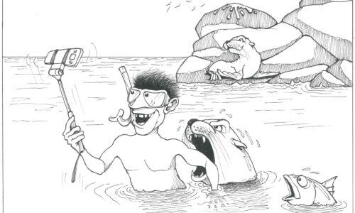 Caricatura por Juan Chuy: Turismo y lobos marinos