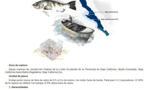 B.C.S. es el estado con más uso de trampa para pescar